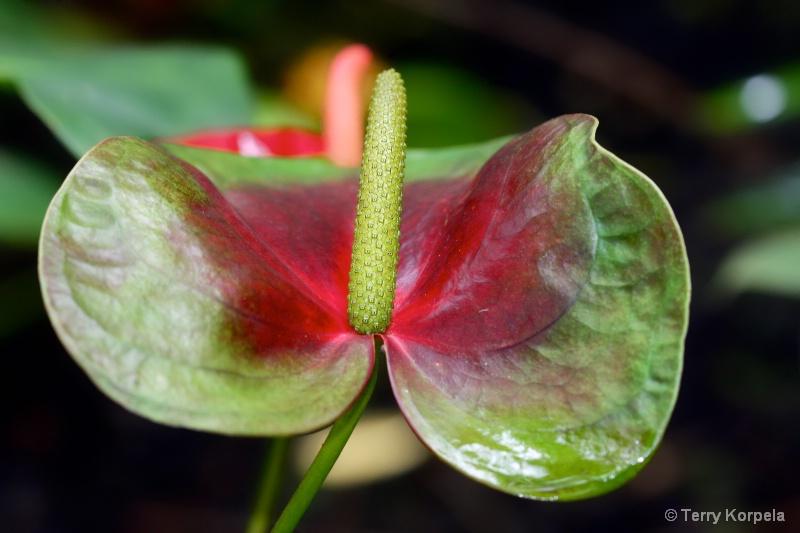 Hilo Botanical Garden