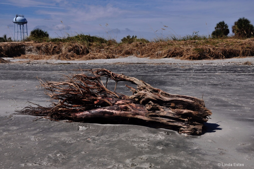 Driftwood Origins: Beyond the Hurricane