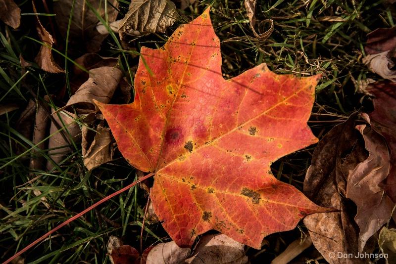 Fallen Fall Leaf