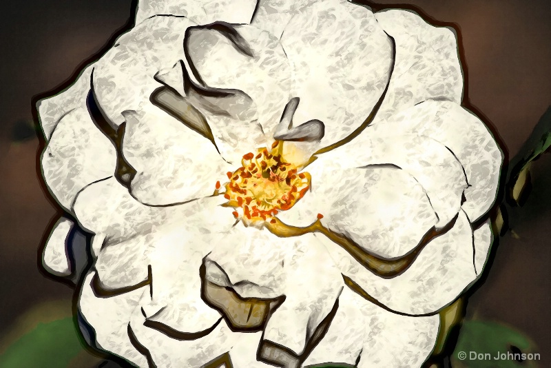 Artistic Beautiful White Rose 10-22-16 613