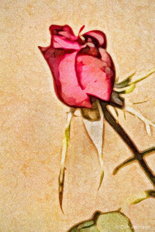 Artistic Profile of a Rose 10-22-16 579