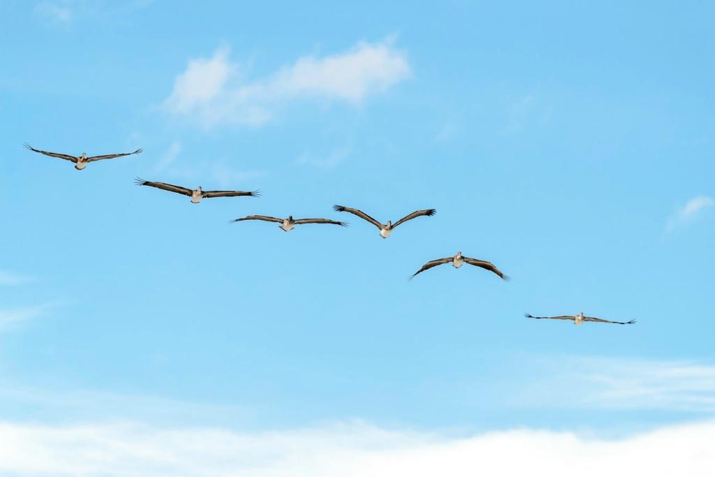 Pelican Approach