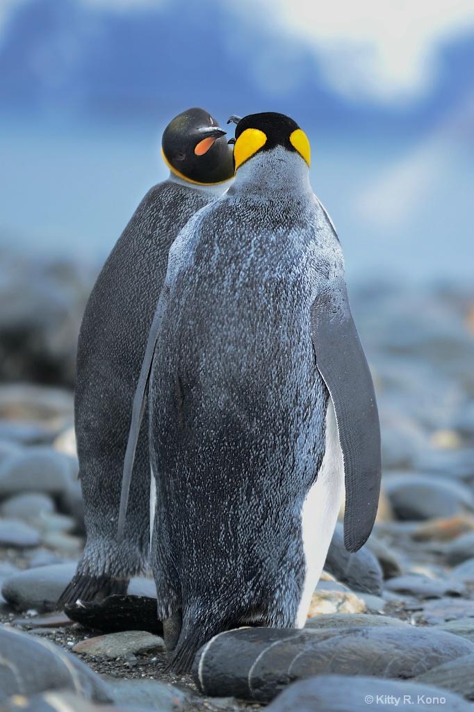 Two Penguins - Salisbury Plain