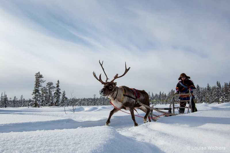 Reindeer Sled Ride