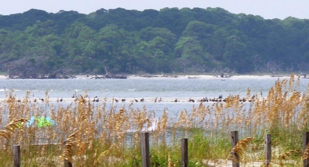 Tybee Island Beach Saltwater Flats Seabirds