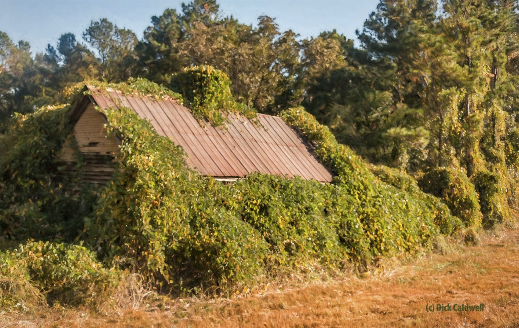 Kudzu takes over everything! Image by Dick Caldwel