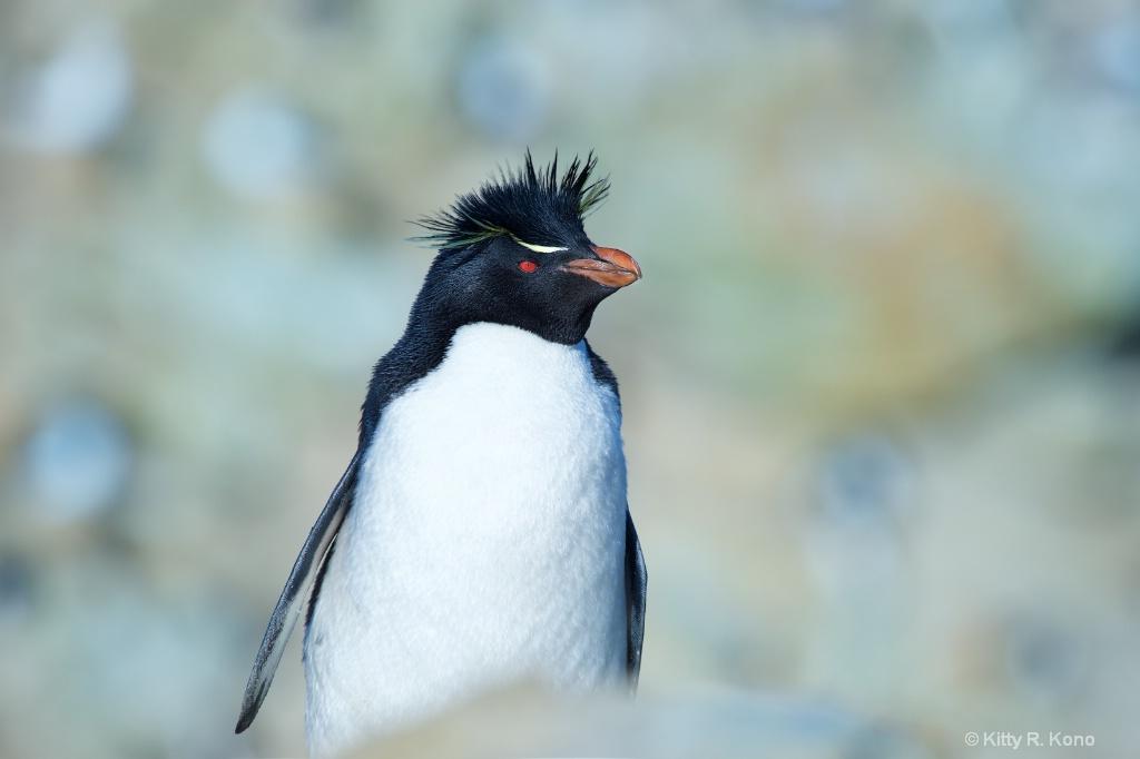 Handsome Rockhopper Penguin