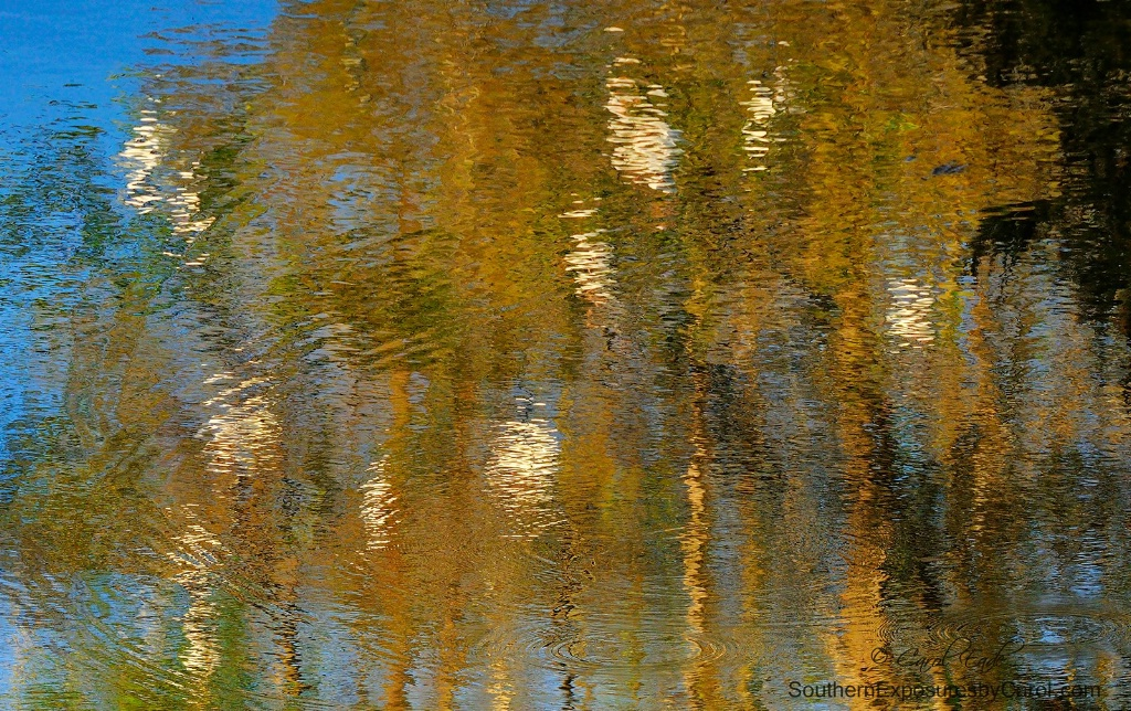 Wetlands Reflecting