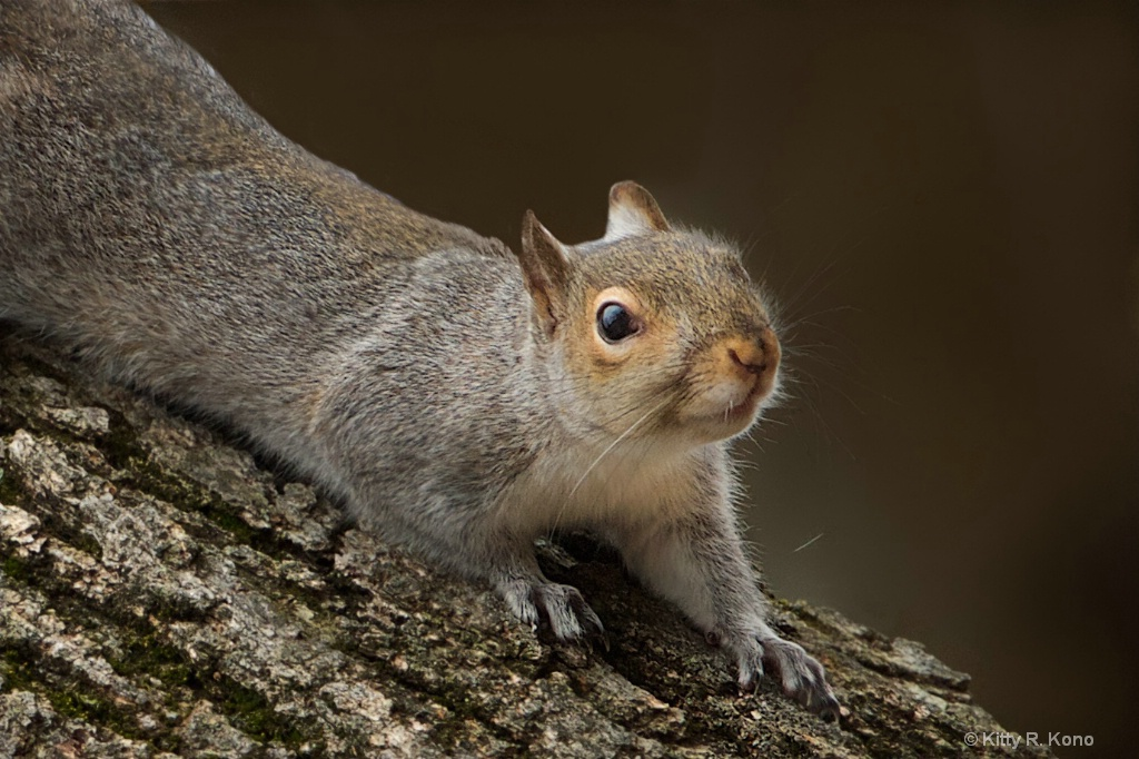 Little Squirrel Posing Before the Inauguration