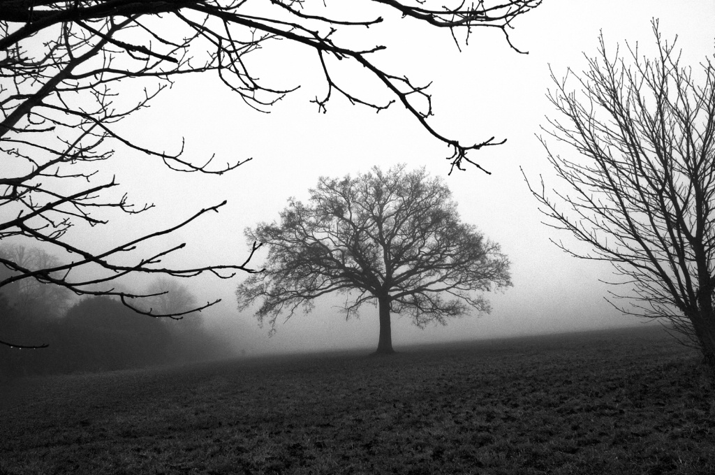 Framed Tree in the Mist Monochrome