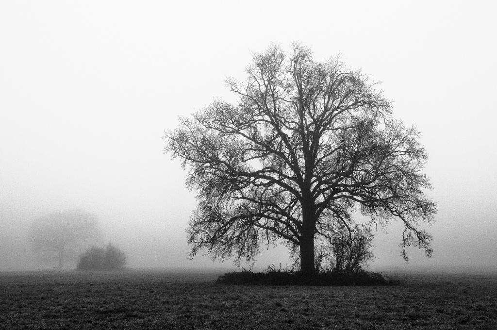 Fog and trees in Winter 5