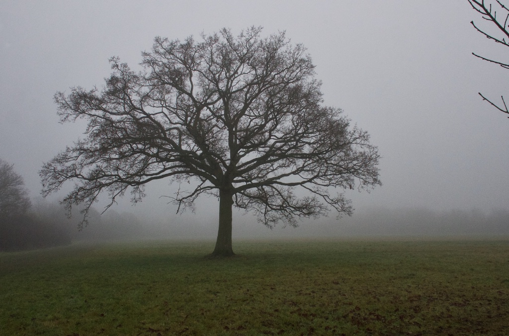 Tree and Fog 1