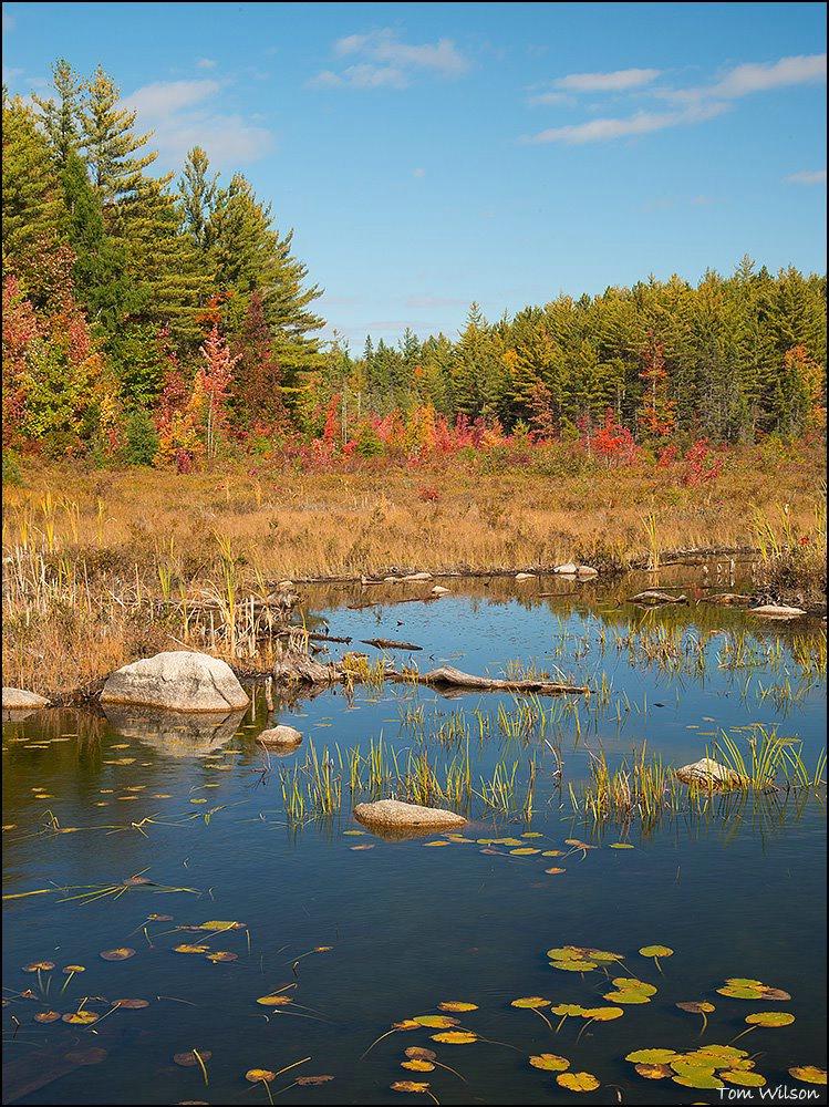 Pond Near Baxter State Park