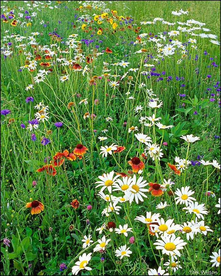 Median Flowers North Georgia
