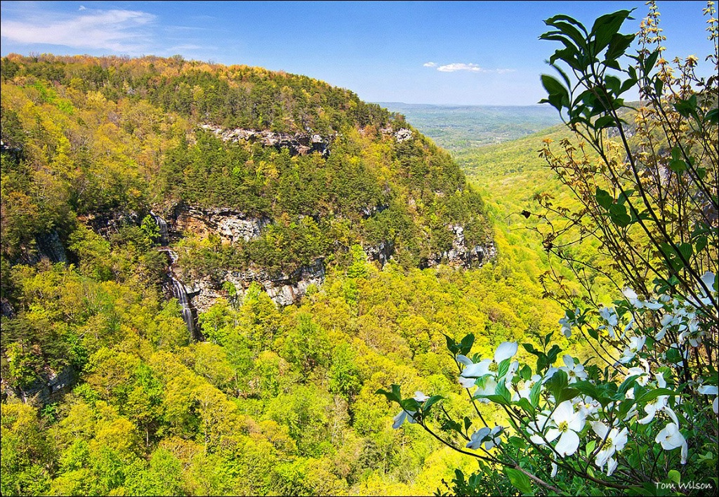 Cloudland Canyon and Dogwood in Spring
