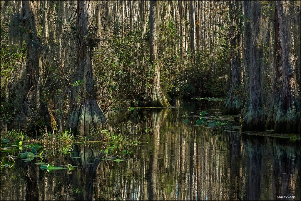 Near Pinball Alley in Okefenokee Swamp