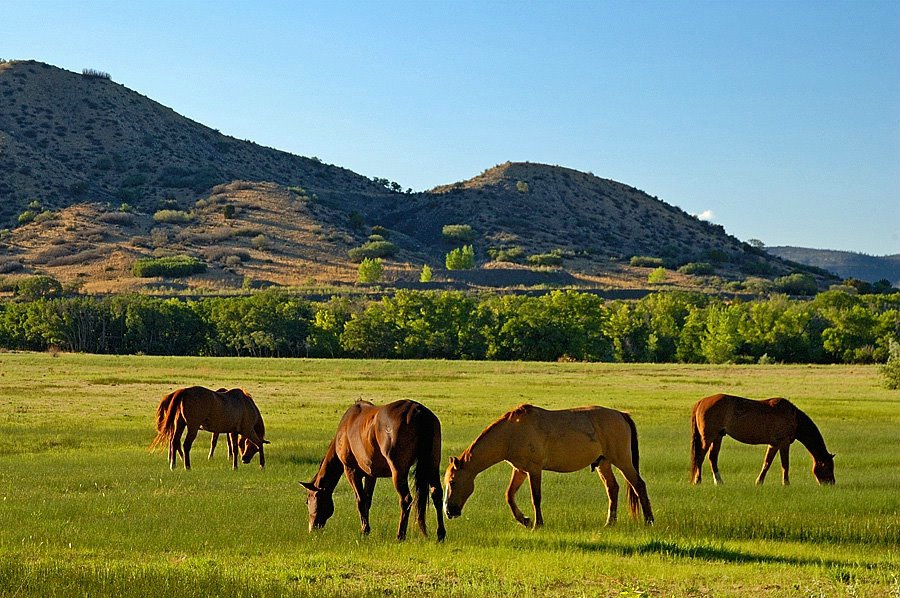 New Mexico Pastoral