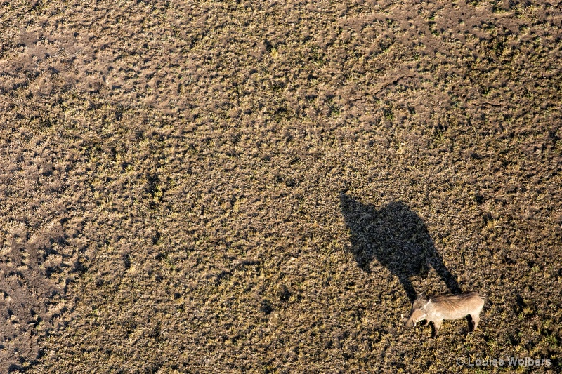 Warthog Shadow