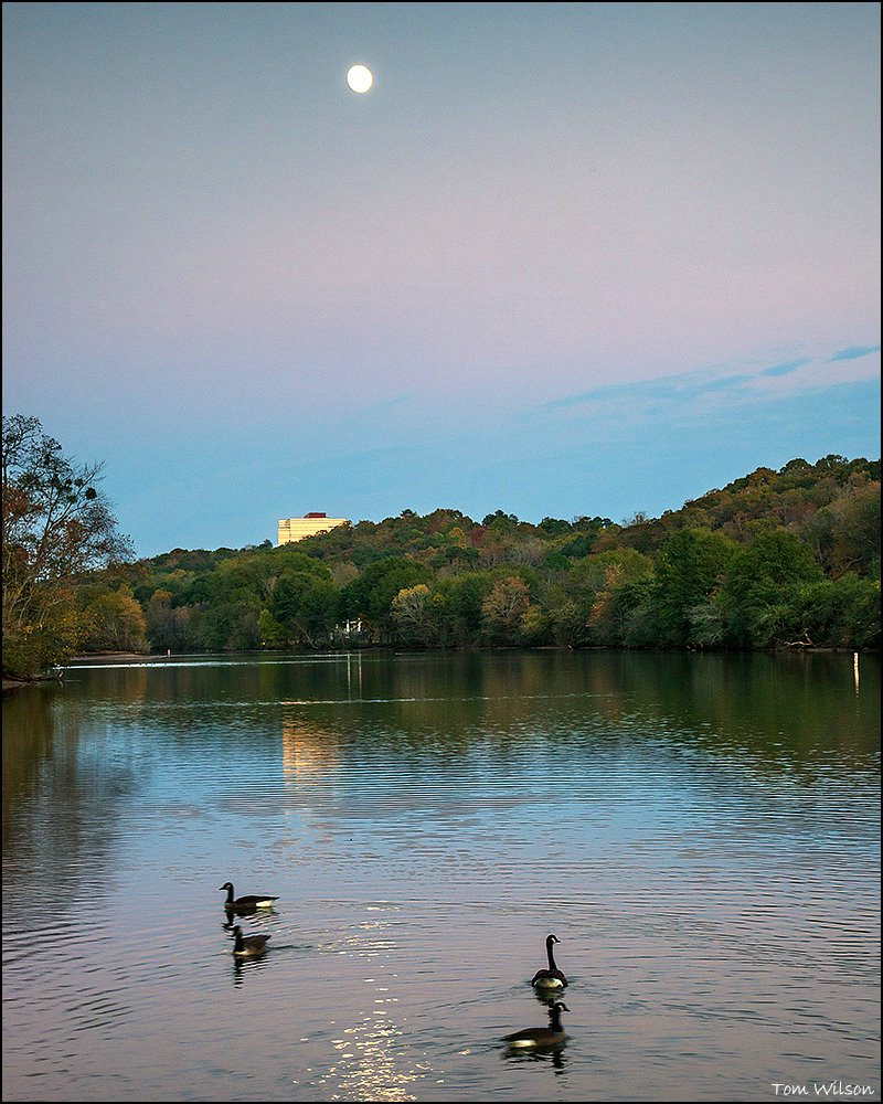 Moon and Geese at Roswell Park