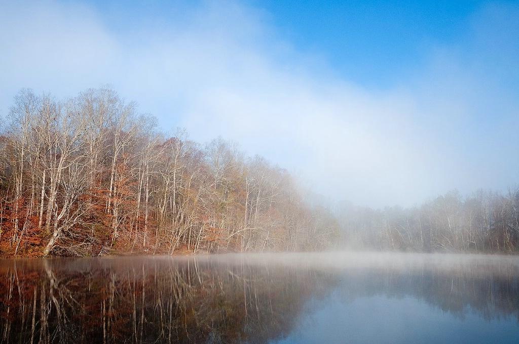 Gold Branch Fog