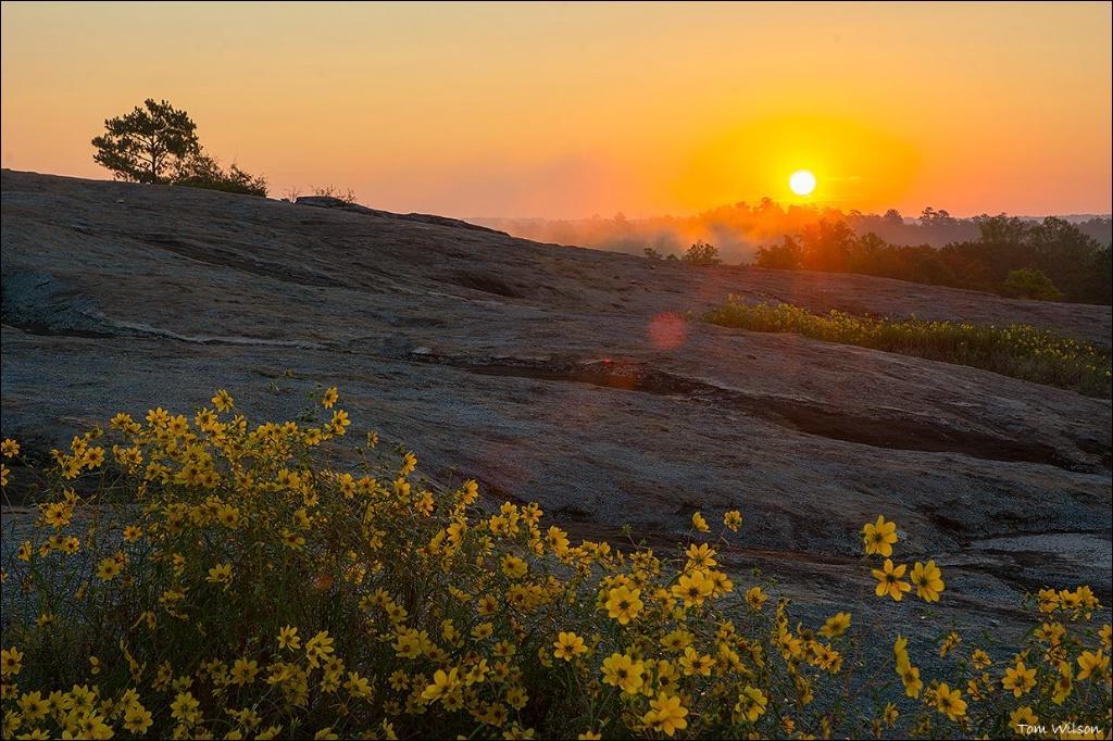 Sunrise at Davidson Arabia II