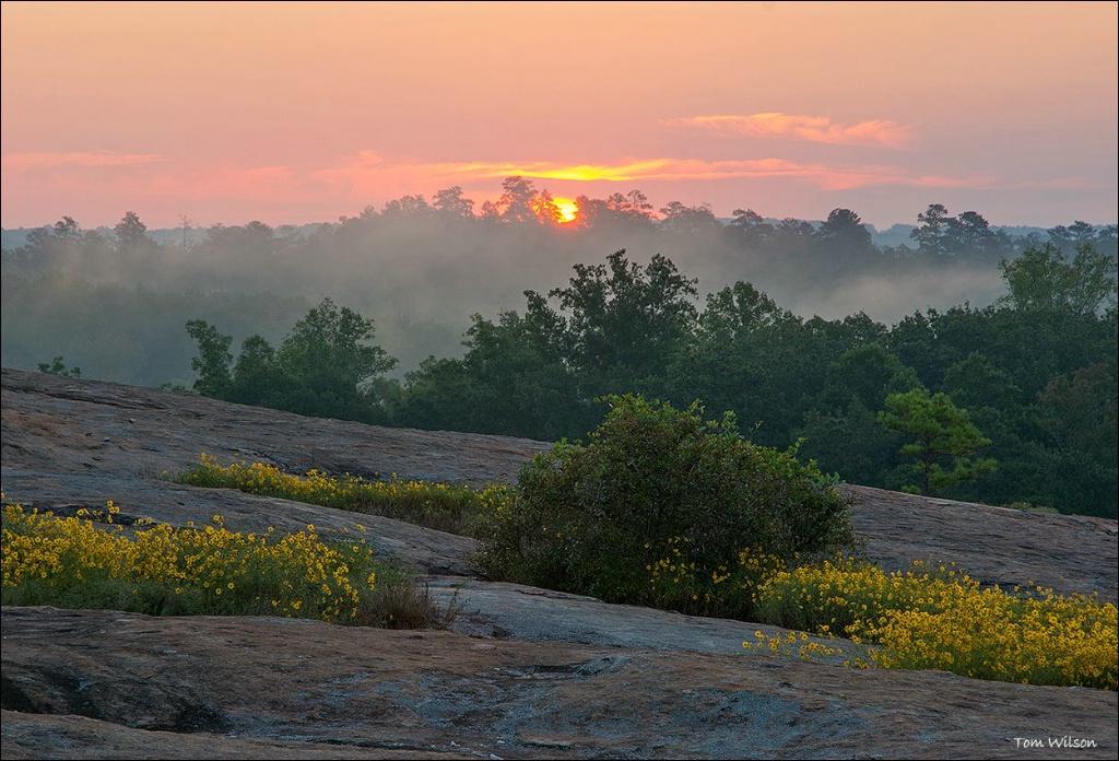 Sunrise at Davidson Arabia