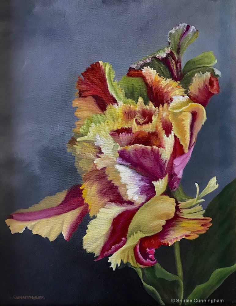 Rembrandt Tulip in Old Master Style SOLD