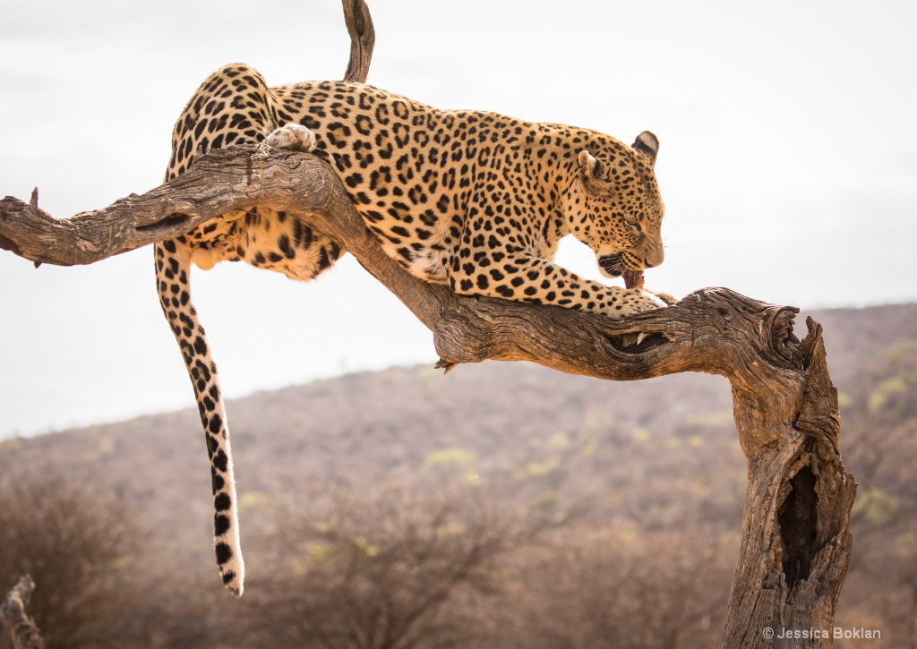 Leopard Dining