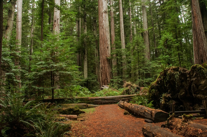 Down The Redwood Trail