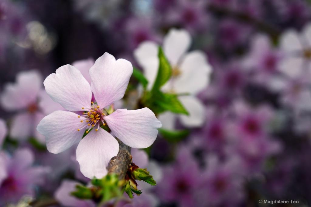 """""""Blossom Bliss"""" (粉色之恋)"""