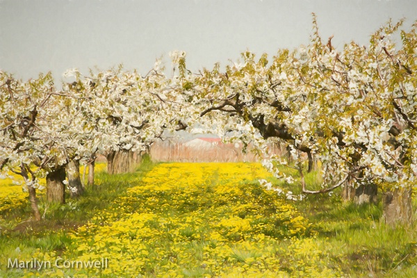 Niagara Blossom Trail - II