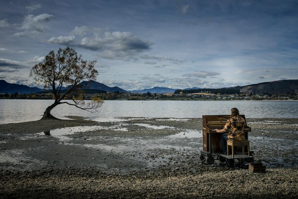 Music for the Wanaka Tree