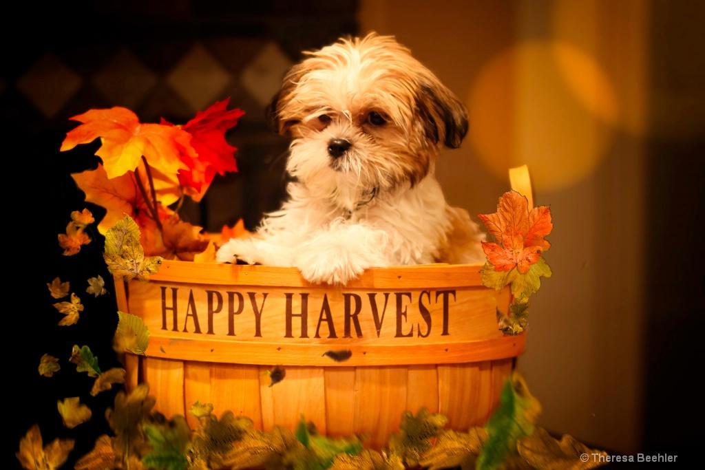 Bruno - My Basket of Joy
