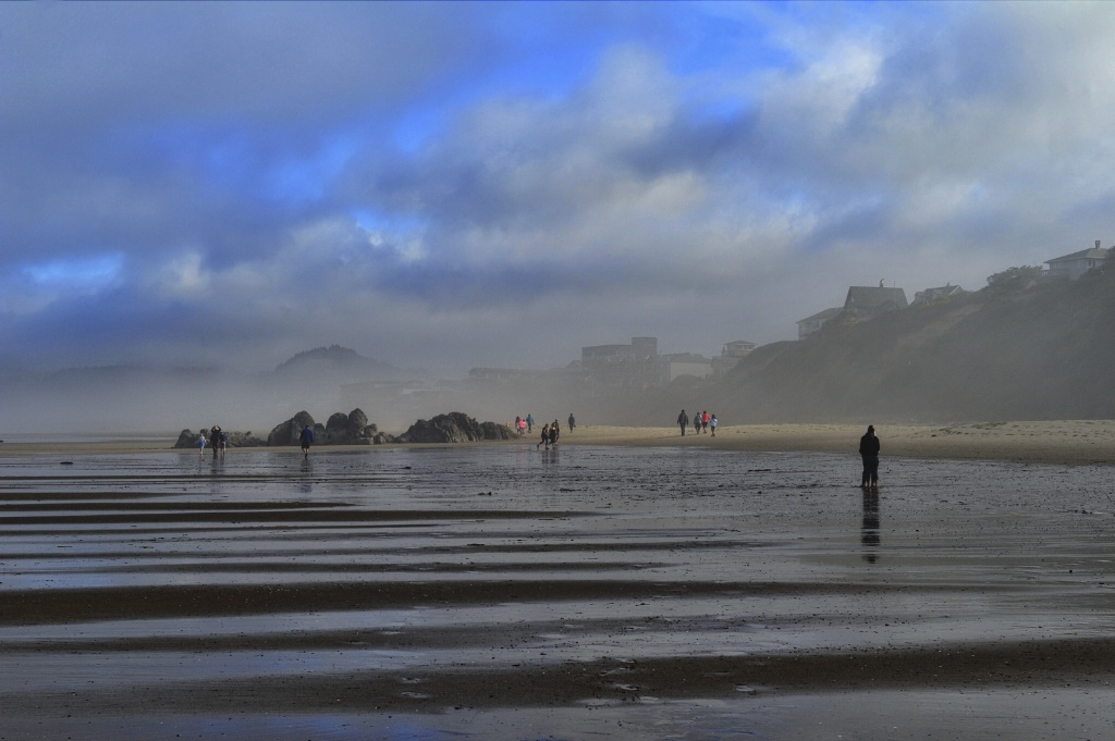 Foggy coastal morn