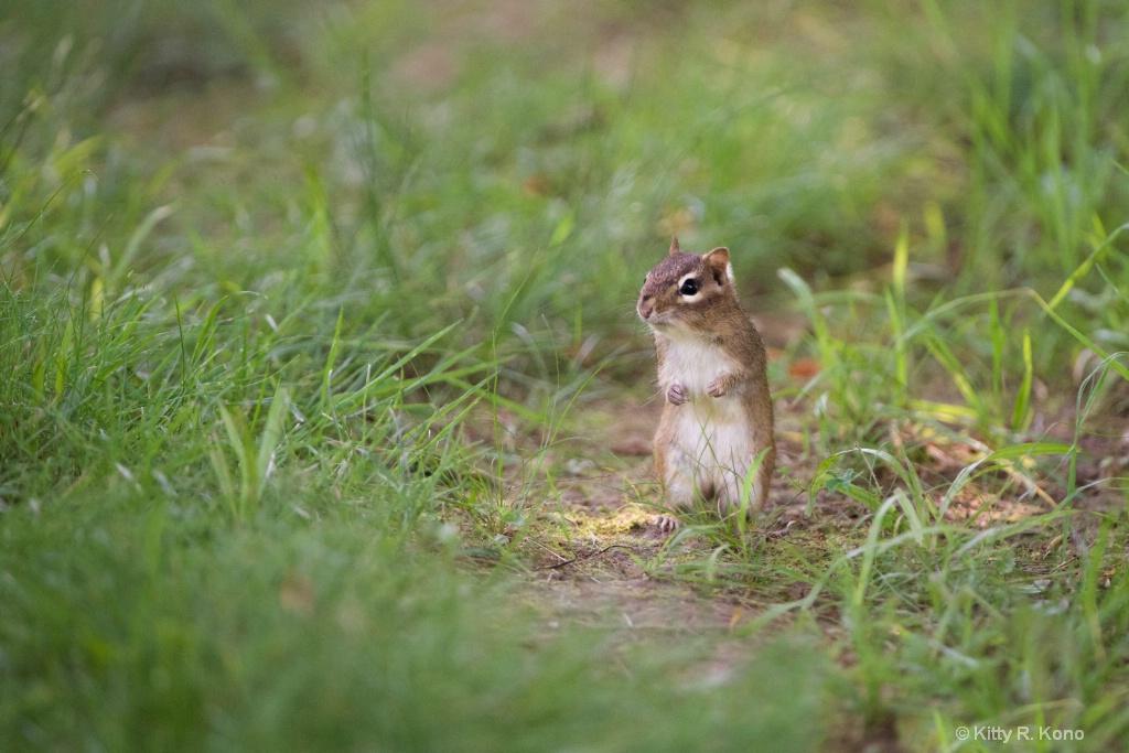 The Little Chipmunk
