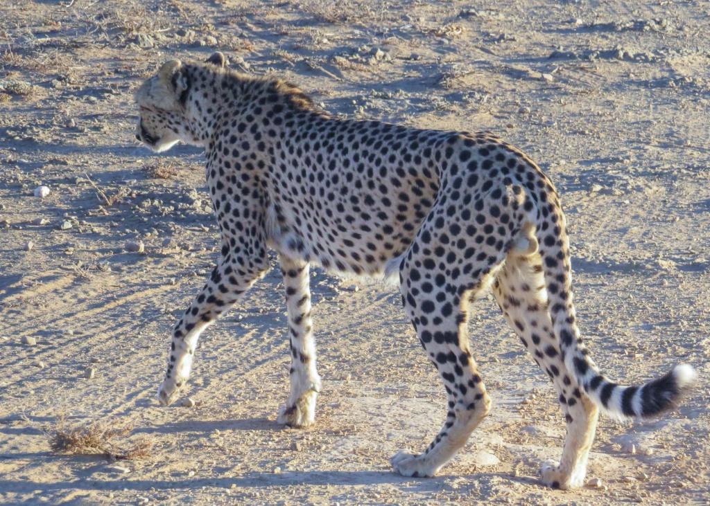 """Cheeta, """"out o' here"""""""