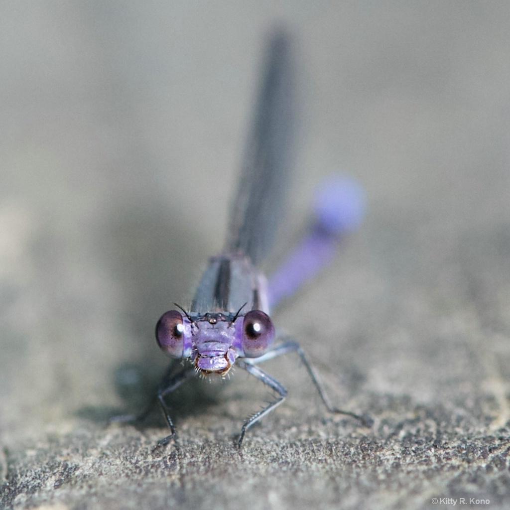 My New Purple Friend
