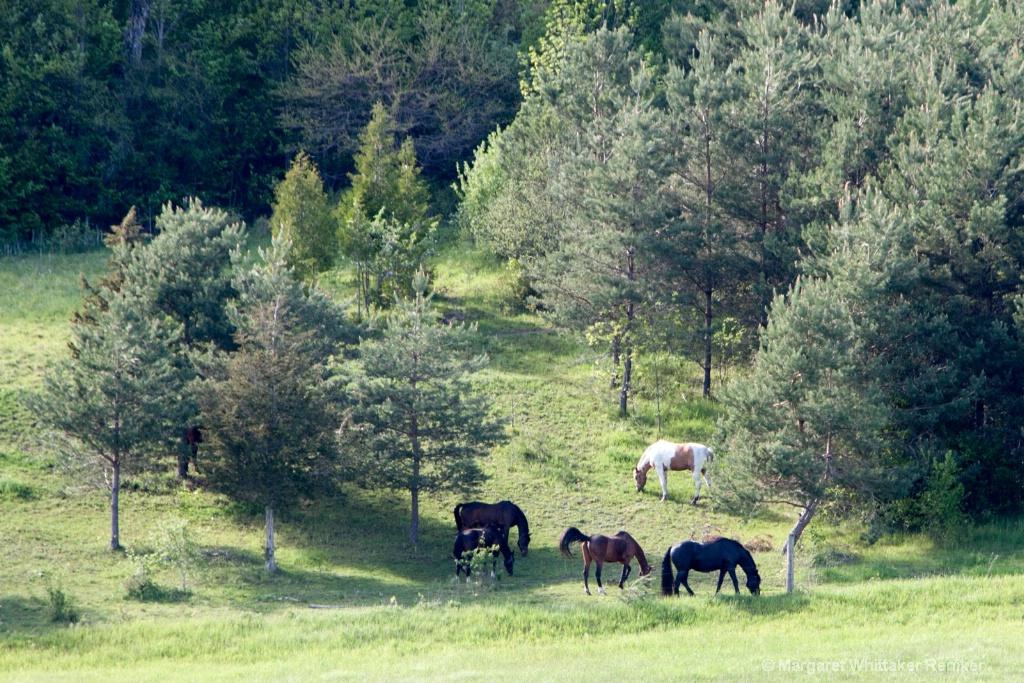 horses MG 0068-1