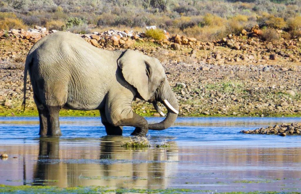 Elephant kid play time