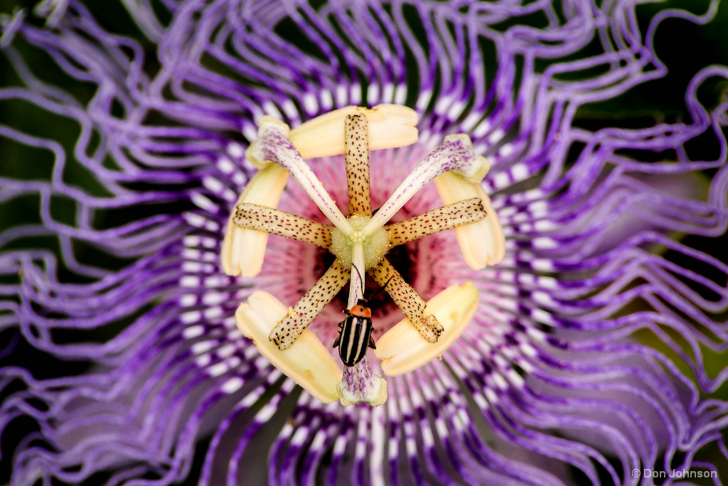 Passion Flower & Bug 7-31-17 277