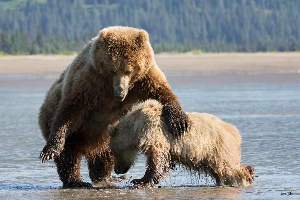 Mama Bear Discipline