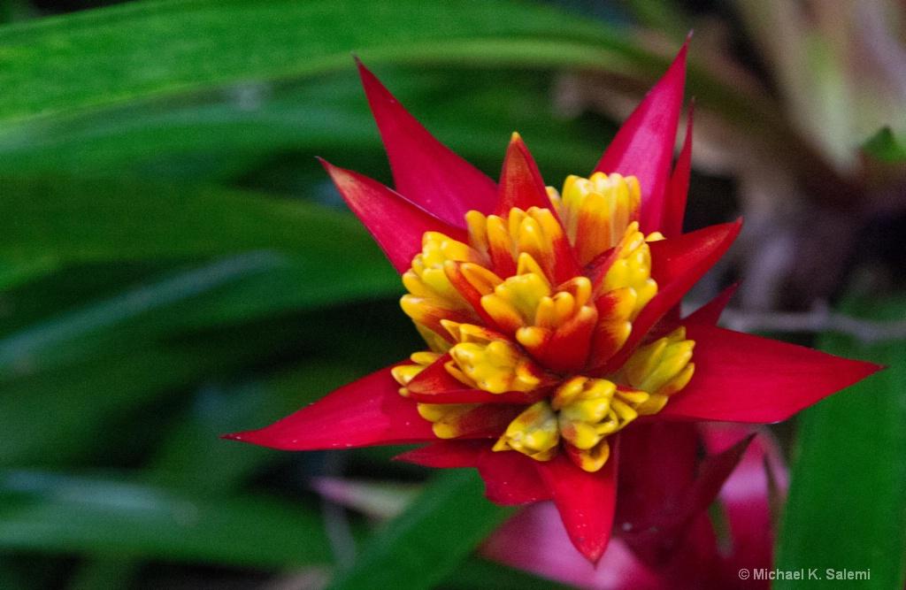 Cape Tribulation Flower