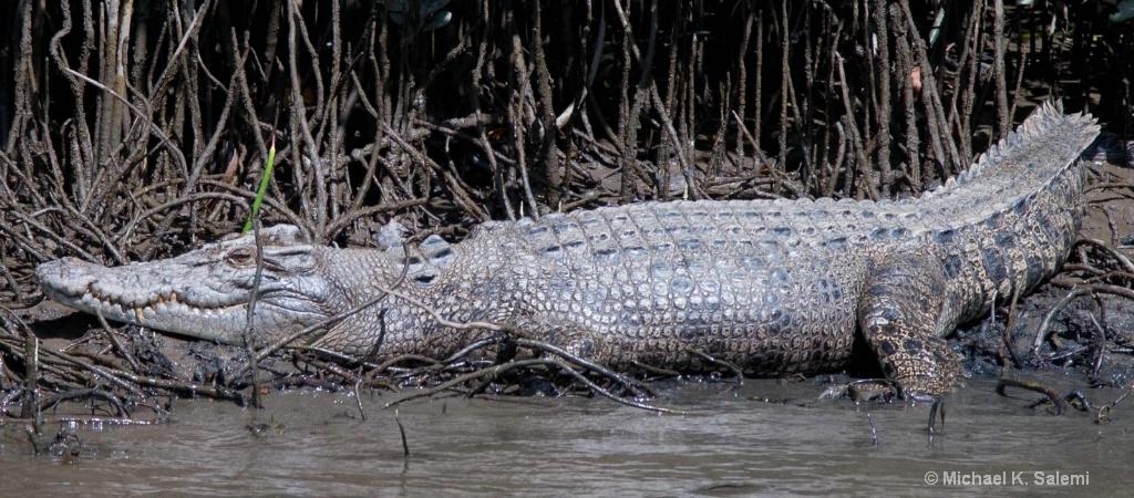 Croc Two