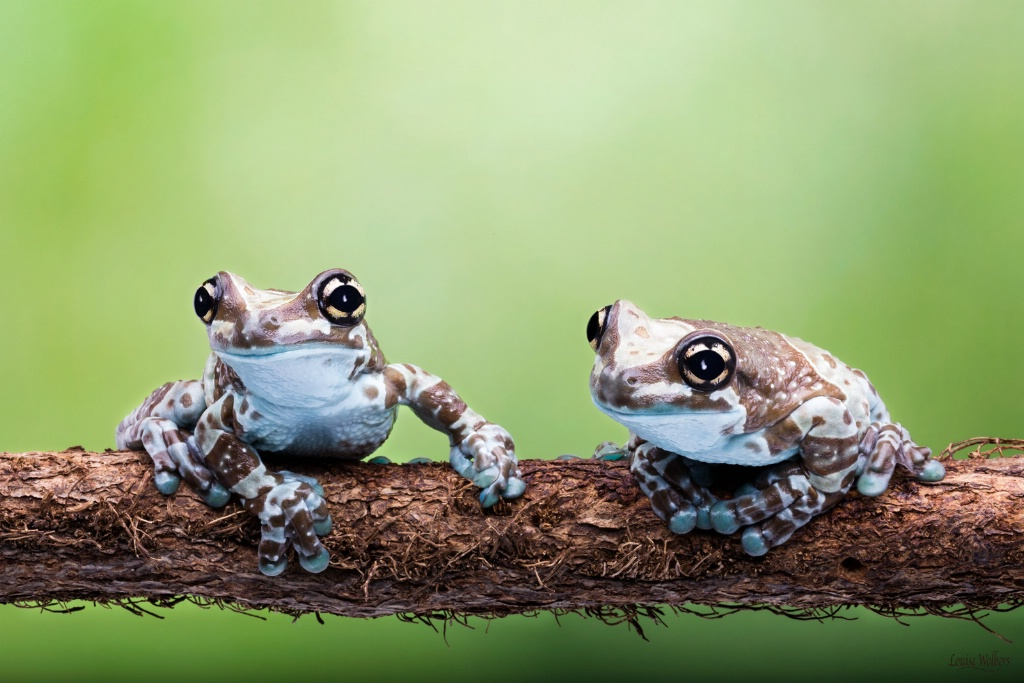Two Friends on a Log