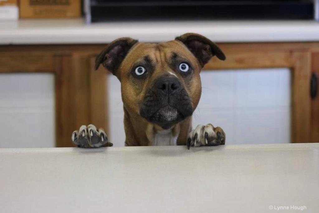 Man I help you?