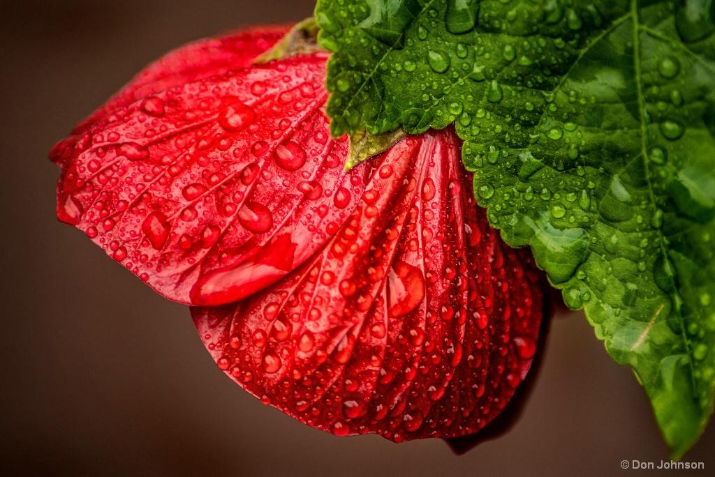 Wet Flower 9-16-17 220