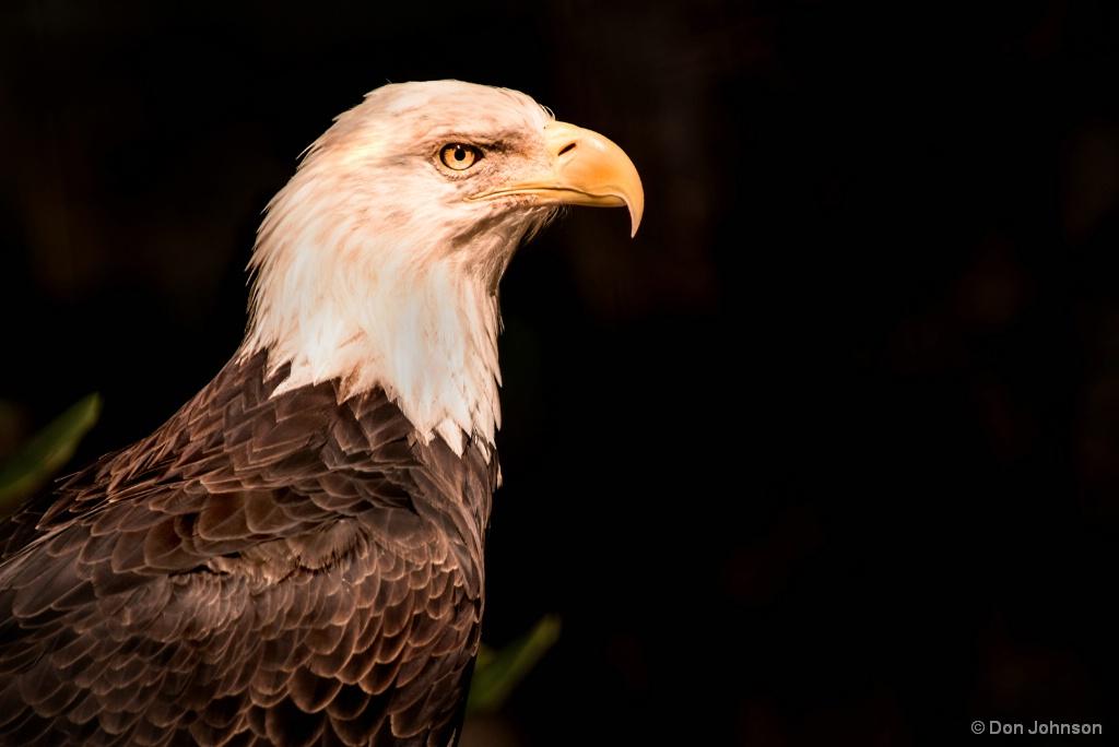 National Bird 9-16-17 295
