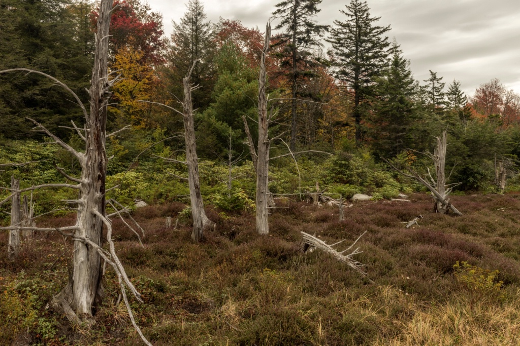 Big Run Bog