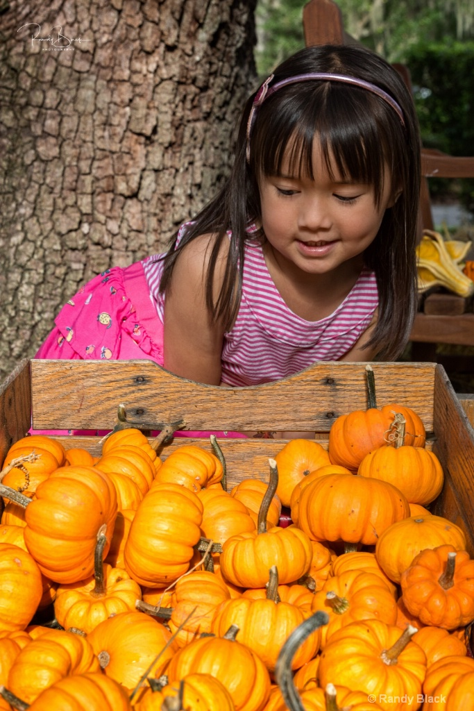 Pumpkins, Wagon Load!