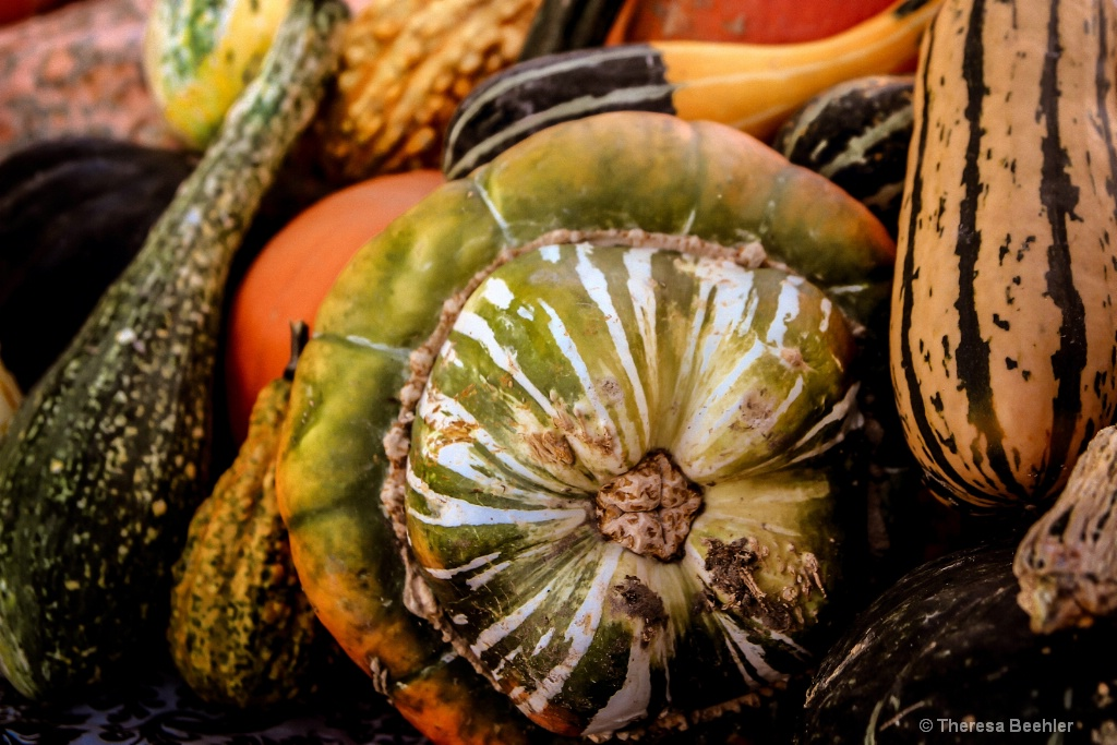 Pumpkins - Fall Bounty 3